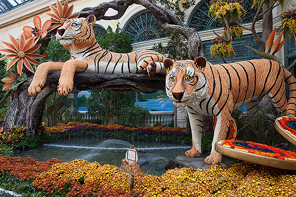Bellagio Conservatory Fall Display North Garden