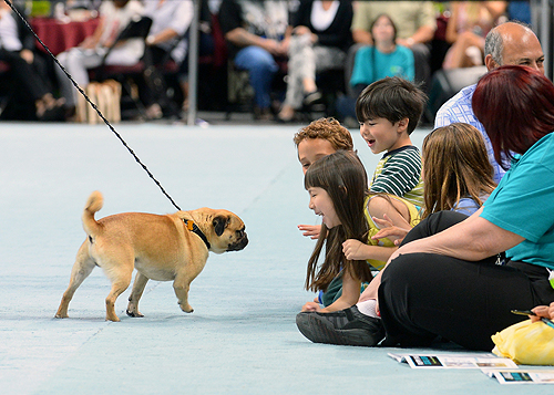 Contestant Bogo greets excited spectators during The Animal Foundations 11th annual Best In Show Vegas 4.27.14